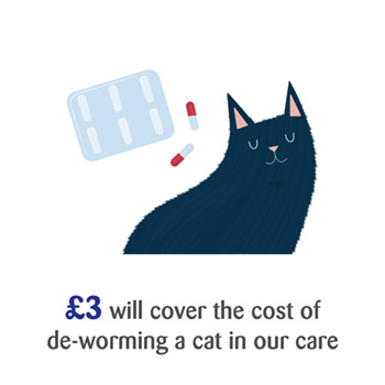 £3 will cover the cost of de-worming a cat in our care.
